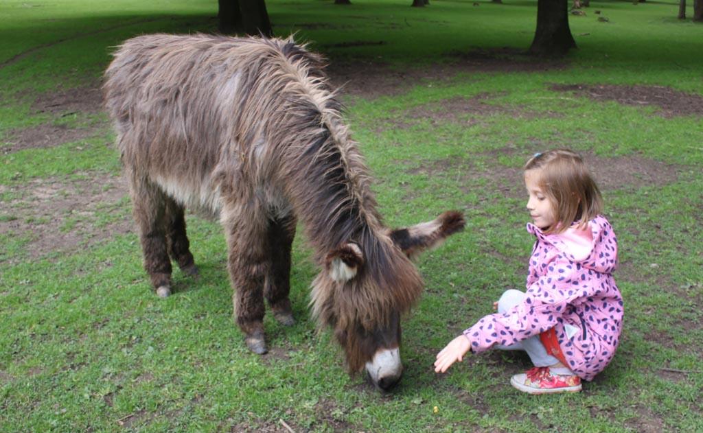 Mooi wandelen en dieren tegenkomen in Wildpark Anholter Schweiz