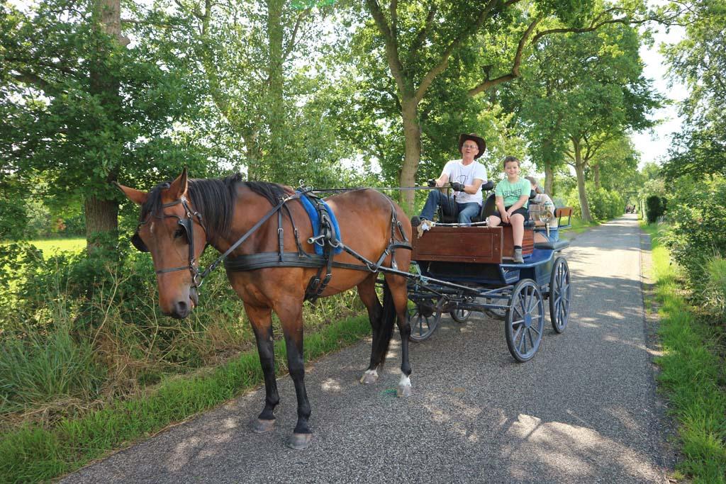 Met de paardenkoets een ritje maken in de omgeving van de camping.