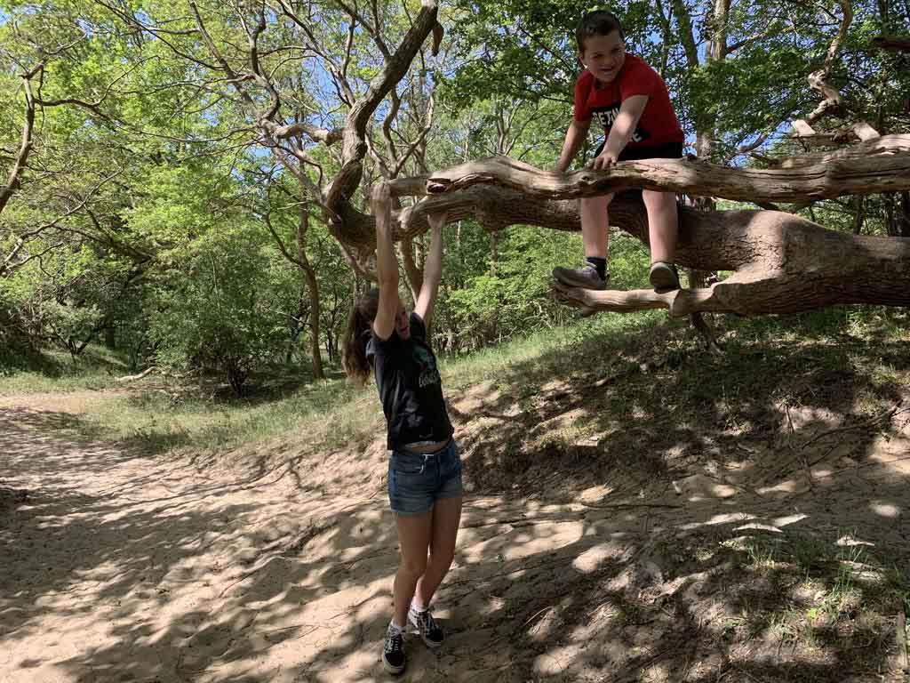 Klimmen, hangen en springen. Wat nodigen deze bomen uit om te spelen.