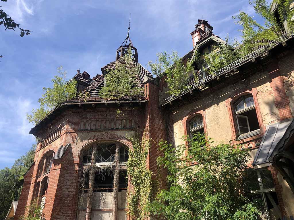 Bomen groeien door het dak.