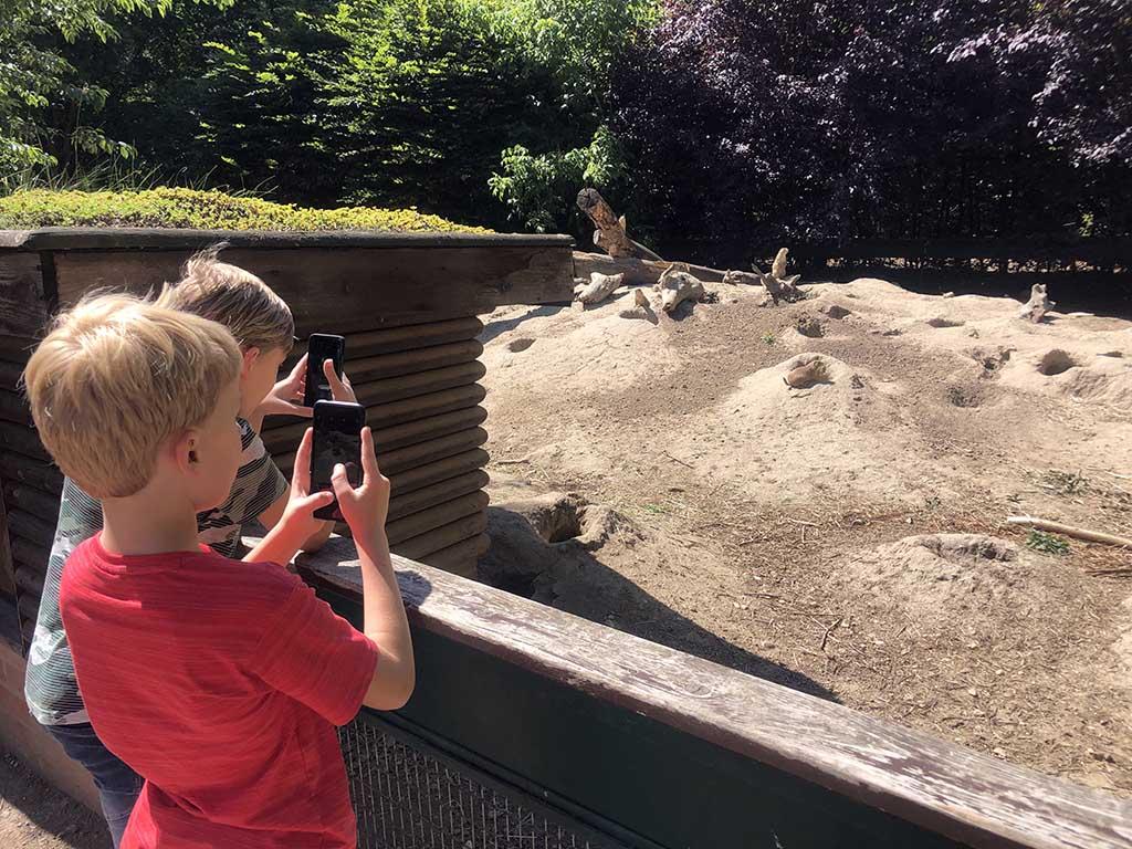 Toerpark Dessau is een mooie, middelgrote dierentuin
