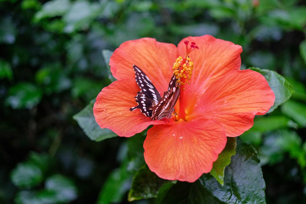We zien veel mooie vlinders in het vlinderpark