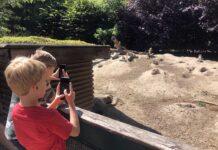 Foto's maken van de leuke prairiehondjes