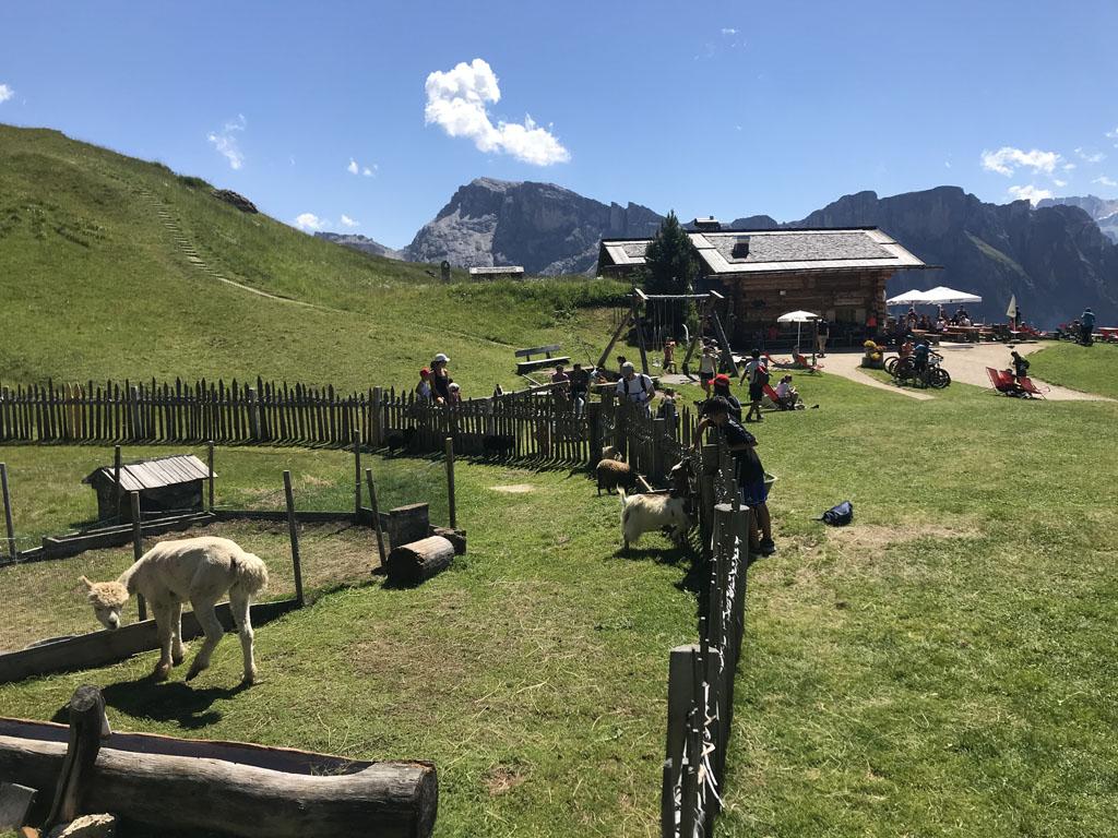 De Baita Troier Hütte op 2250 meter heeft zelfs een dierenweide.